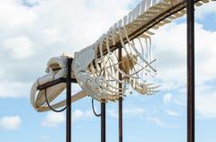 Whale skeleton. Horizontal photo, Fuerteventura, Canary island Stock Photo