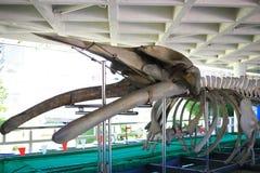 Whale skeleton Royalty Free Stock Photos