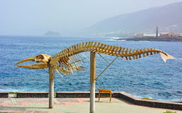 Whale Skeleton. Skeleton of a Sperm Whale. Photo was taken in Puertito de Los Silos on the island Tenerife Spain stock photo