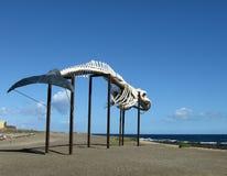Whale sketeton in Salinas del Carmen Stock Photography