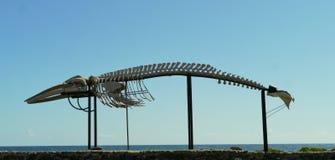 Whale sketeton in Salinas del Carmen Stock Photos