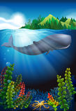 Whale swimming under the ocean. Illustration Stock Photography