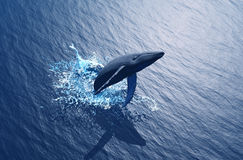 Whale. Swims in the water Stock Photo