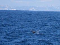 Whale Tail 2 stock photos