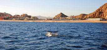 Whale Tail. In Cabo San Lucas Royalty Free Stock Photos