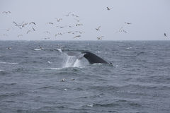 Whale Tail 9 Royalty Free Stock Images