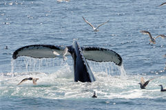 Whale tail Stock Photo