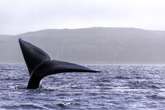 WHALE TAIL ON BLUE WATER