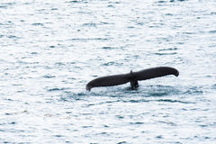 Whale Tail stock images