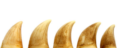 Whale teeth Stock Photography