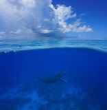 Whale underwater sea split with cloudy blue sky. Above and below sea surface, a humpback whale underwater with cloudy blue sky split by waterline, Pacific ocean stock photography