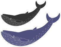 Whale Stock Photography