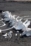 White bones of dead whale Royalty Free Stock Photos
