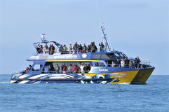 Whale watch, Kaikoura, New Zealand stock images
