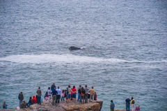 Whale watch Royalty Free Stock Photo
