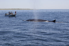 Whale Watchers. On a boat viewing the whales in the ocean stock photo