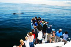 Whale Watchers crowd the bow. Of a ship, spotting a spouting humpback stock photography
