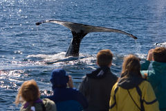 Whale watching royalty free stock photos