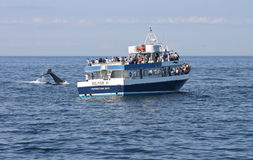 Whale watching Stock Photography