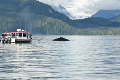 Whale watching adventure. From Juneau Alaska , Marine life , Humpback whale tail Stock Image