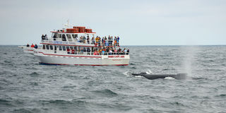 Whale Watching Boat on the sea, Massachusetts Stock Image