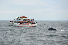 Whale Watching Boat on the sea, Massachusetts Royalty Free Stock Photo
