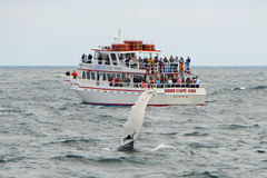 Whale Watching Boat on the sea, Massachusetts Royalty Free Stock Image