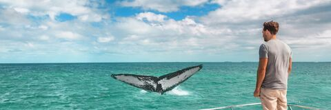 Free Whale Watching Boat Tour Tourist Man Panoramic Banner Background Of Humpback Breaching Flapping Tail Travel Destination Royalty Free Stock Photography - 194176567