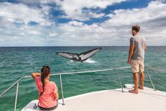 Whale watching boat tour tourists people on ship looking at humpback tail breaching ocean in tropical destination, summer travel stock photography