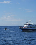 Whale Watching Boat. Tourists on a whale watching boat see the tail fluke of a humpback whale as it starts to dive Stock Photography