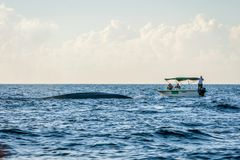 Whale watching by boat. TRINCOMALEE, SRI LANKA - MARCH 9: Group of people observing blue whales from the whale watching boat. March 2017 royalty free stock photos