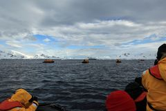 Whale Watching of Humpback Whales in Antarctica stock image