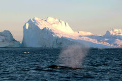 Whale watching in a Ilulissat midnight Royalty Free Stock Photo