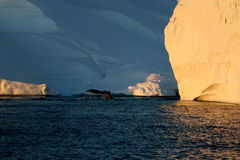 Whale watching in a Ilulissat midnight.  Royalty Free Stock Photography