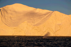 Whale watching in a Ilulissat midnight.  Stock Photography