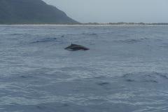 Whale watching at Napali Coast on Kauai, Hawaii. In winter stock photos