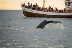 Whale watching, near Husavik. HUSAVIK, ICELAND - JUNE 15, 2016: Whale watching scene, with tourists, near Husavik, northeast Iceland royalty free stock photos
