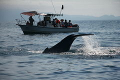 Whale Watching. Peurto Vallarta, Mexico. A whale watching boat sees a humpbacked whales tail on a whale watching trip in the bay stock images