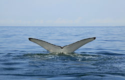 Whale watching in Puerto Vallarta Stock Photos