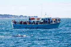 Whale watching vessel Royalty Free Stock Images
