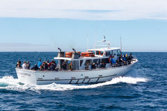Whale watching vessel Stock Photos