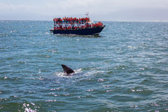 Whale watching Royalty Free Stock Photography