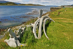 Whalebones by Beagle Channel in Tierra del Fuego Royalty Free Stock Photography