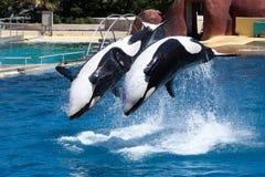 Whales Stock Photo