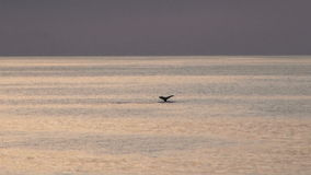 Whales in Antarctica - Antarctic Peninsula - Global Warming stock footage
