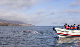 Whales in Baja, Mexico. Whale watching in Ojo De Liebre Lagoon in Baja, California, Mexico stock photography