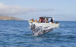Whales in Baja, Mexico Stock Photo