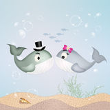 Whales couple in love. Illustration of whales couple in love Royalty Free Stock Images