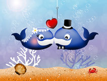 Whales in love Royalty Free Stock Images
