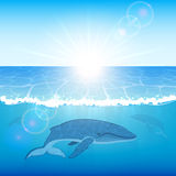 Whales in ocean Royalty Free Stock Images